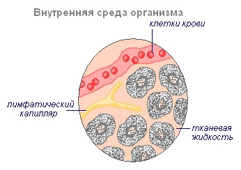 Lymphatic Drainage NSP (Лимфатик Дренаж)